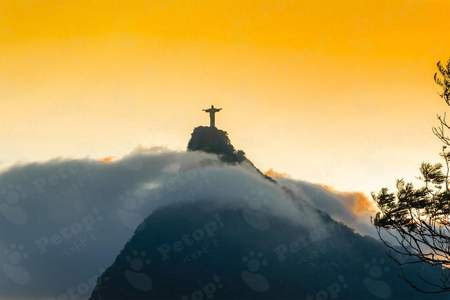 ブラジリアンショートヘアーの飼い方