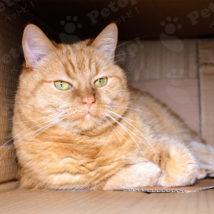 catcardboardi