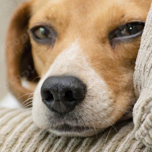 犬にイボ できもの これって病気 治療法や原因についてご紹介