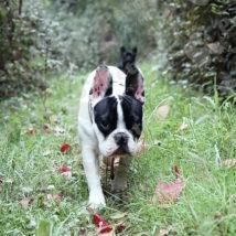 森の中を歩く犬