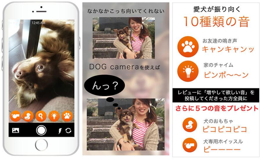 愛犬のカメラ目線カメラ