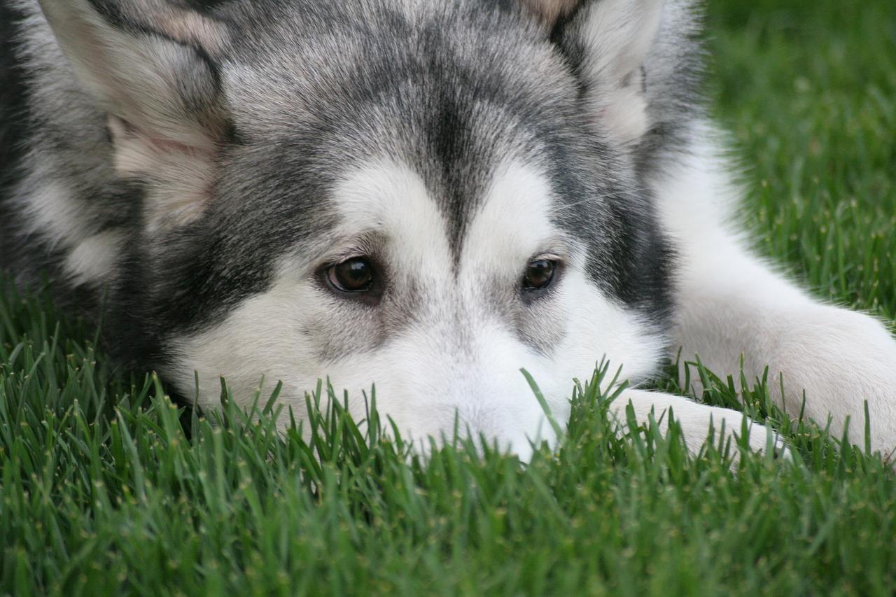 は 発情 期 いつ の 犬