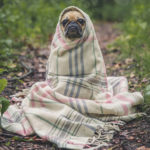 毛布にくるまる犬