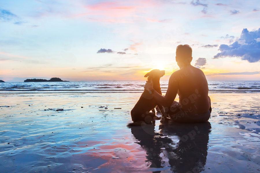 犬と人の歴史