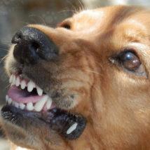 歯を剥く犬