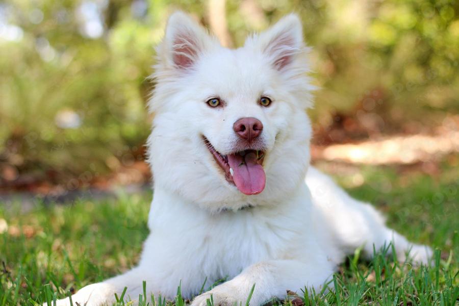 dog_mushi1