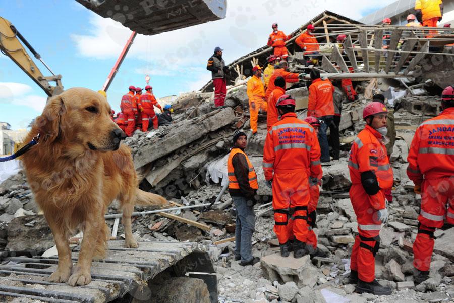 被災地にいる犬