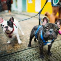 二匹の犬の散歩