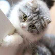 猫が甘える時の心理