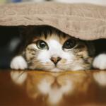 猫用グッズ