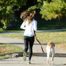 犬が散歩する理由