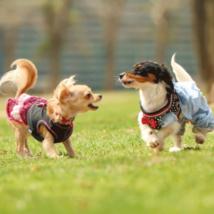 ドッグランで走り回る犬