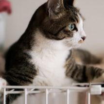 ゲージにはいる猫ちゃん