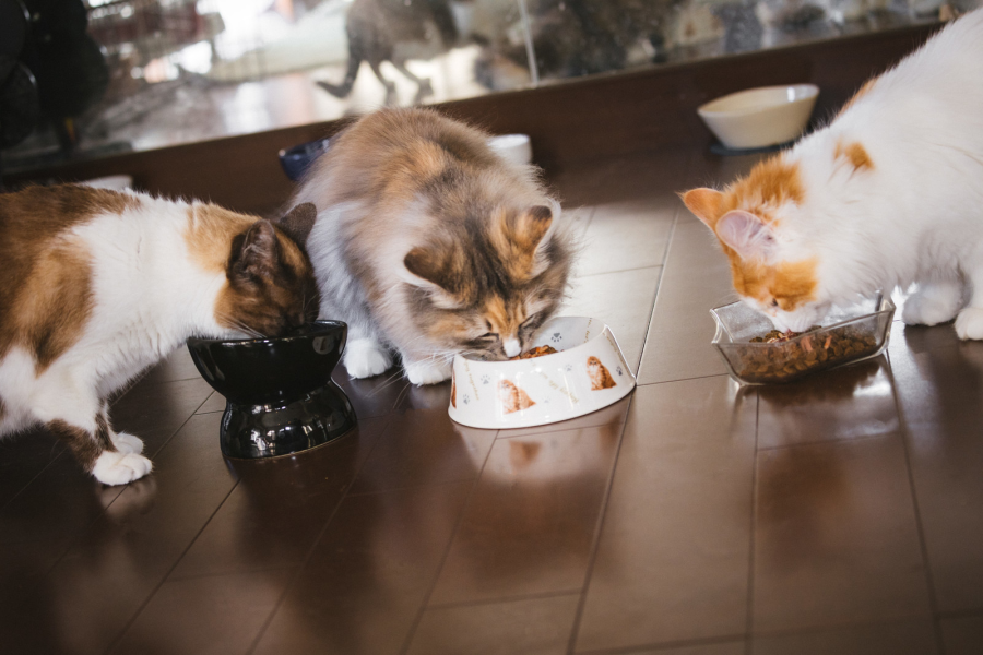 ごはんを食べる猫ちゃん