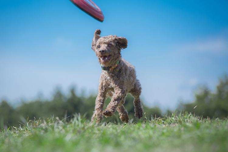 犬の正しいし付け方と注意点