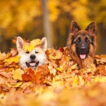 秋の犬の注意点