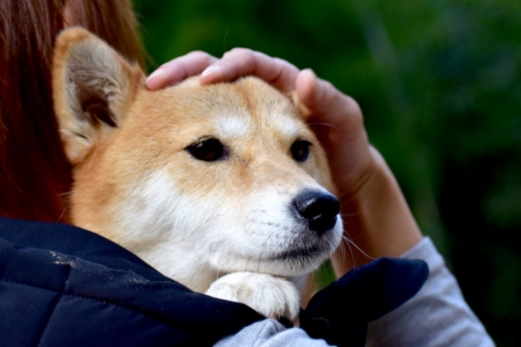 犬を抱える人