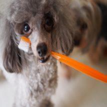 歯ブラシと犬