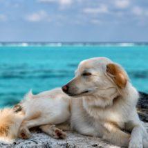 犬が海辺で眠そうにしている