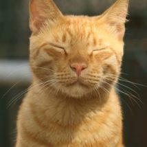 目を細める猫