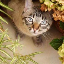 猫と観葉植物