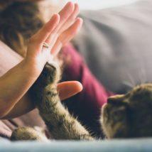 人と手を合わせる猫