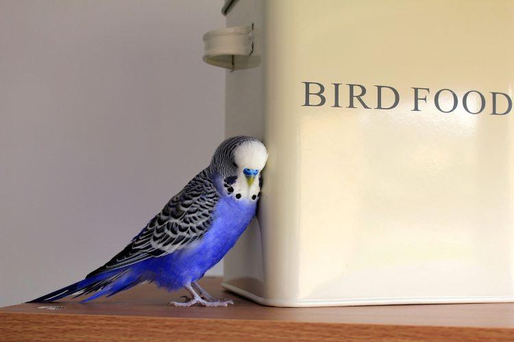 鳥の餌缶と鳥