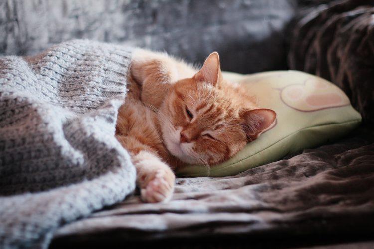 休んでいる猫