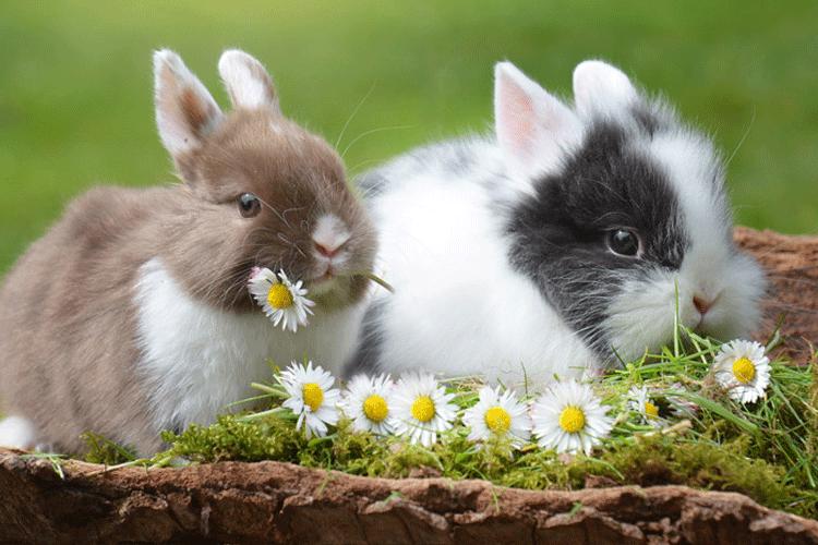 うさぎ牧草や花