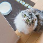 ご飯を催促する猫