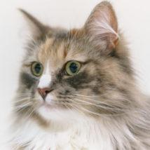 聞き耳を立てる猫