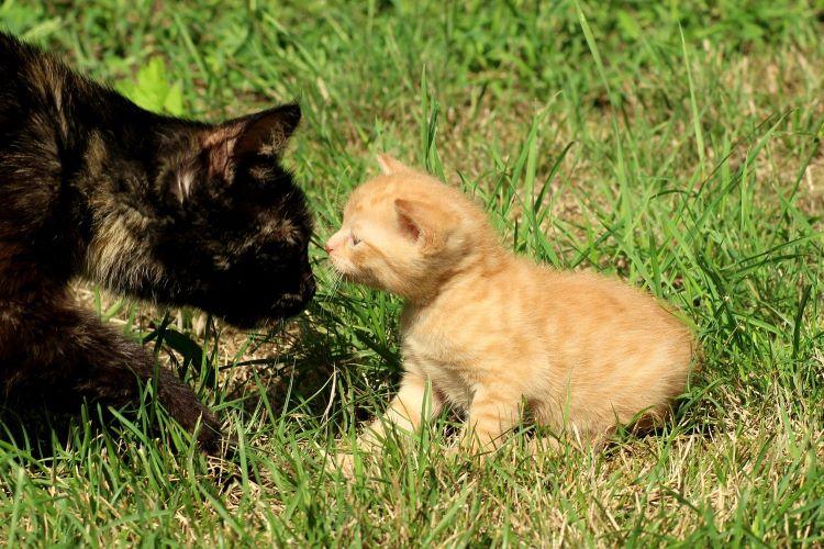 親子の外猫