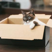 箱にいるネコ