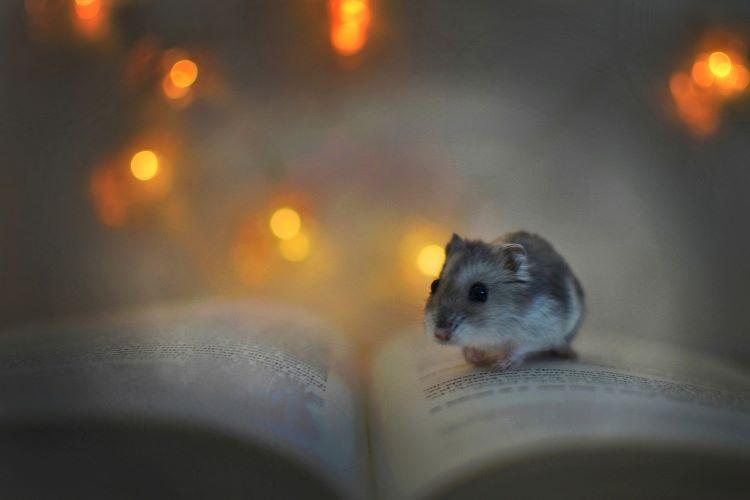 本の上に乗るハムスター