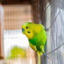 黄緑色のインコ