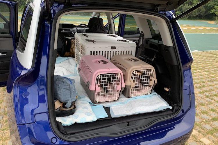車内にカゴに入った犬