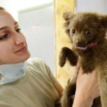 犬と女性獣医