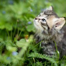 外にいる子猫