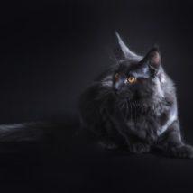 黒い猫と黒い背景