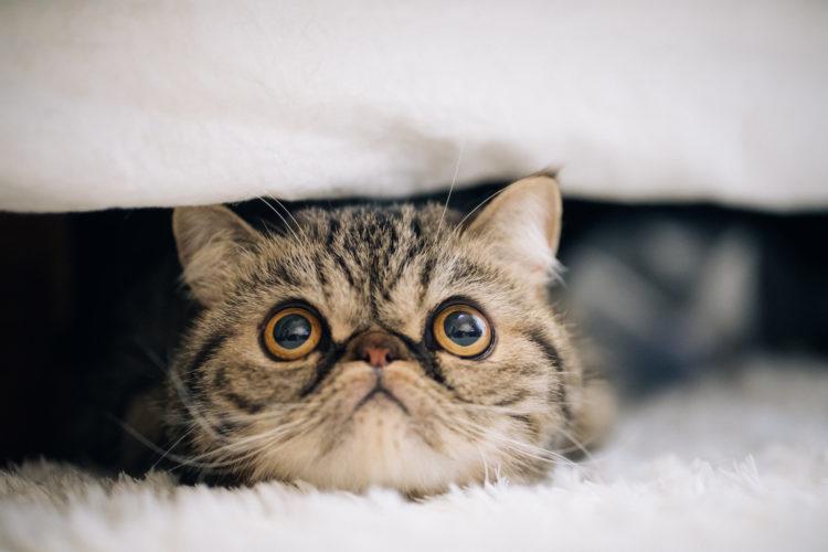 見上げるネコ