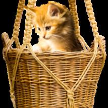 上からのぞく猫