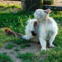 猫の皮膚病について