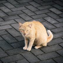 外で泣く猫