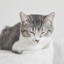 猫の毛の掃除について