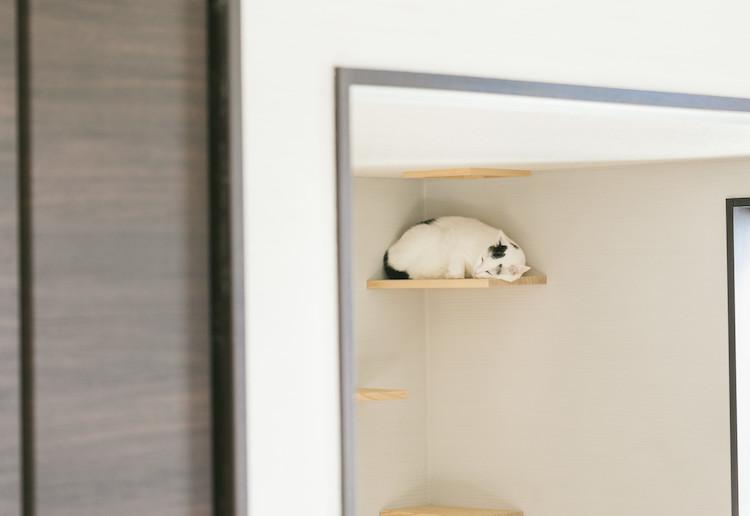 上にいる猫
