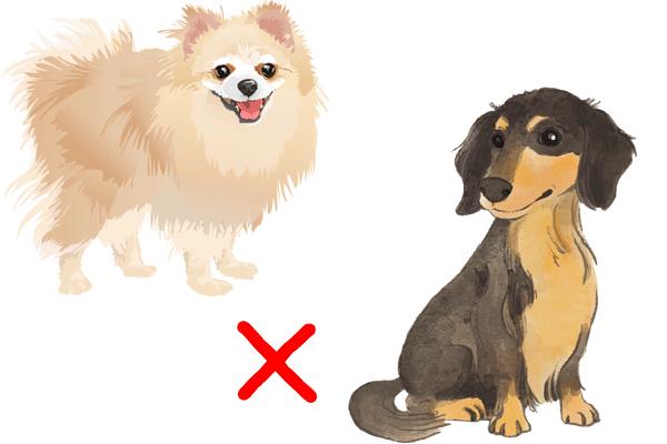 ポメックスミックス犬