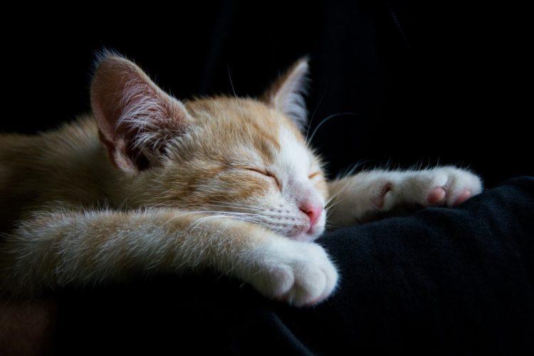 ぐっすりと寝ている猫