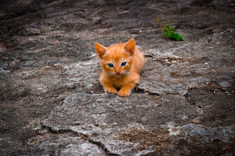子猫の野良猫
