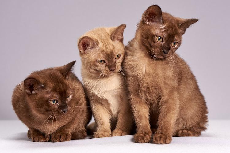 3ひきの猫