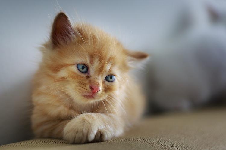 赤茶の子猫